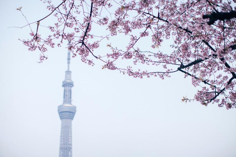 005 Sky Tree