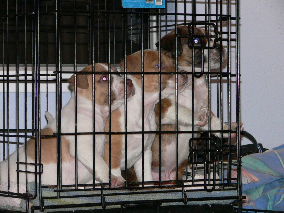 Bakersfield SPCA