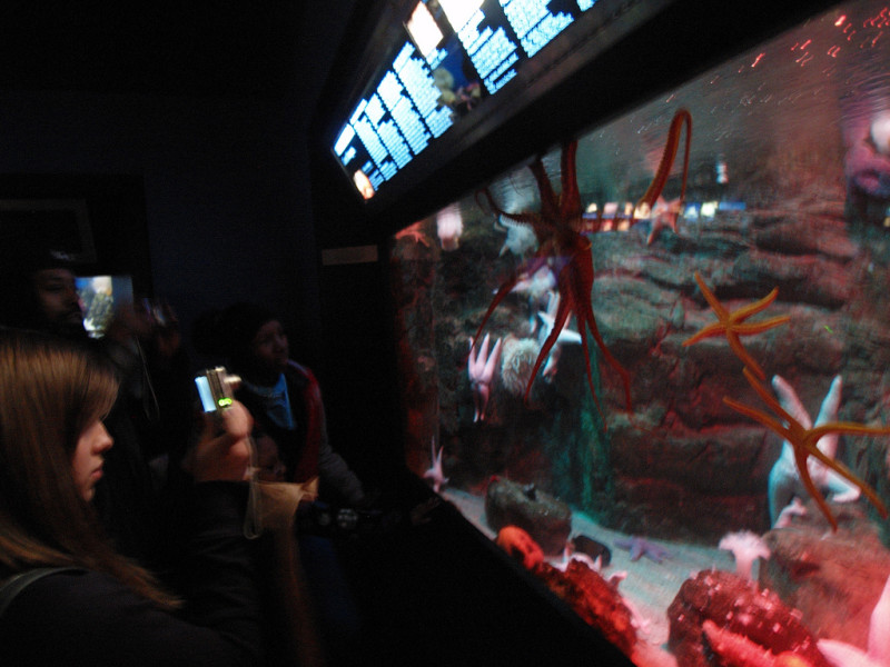 Public Programs in The Aquarium