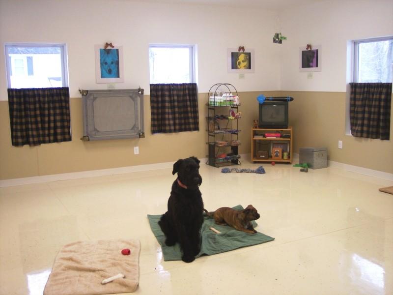 Dog training room image