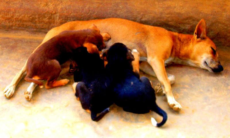Animal Legal Defense