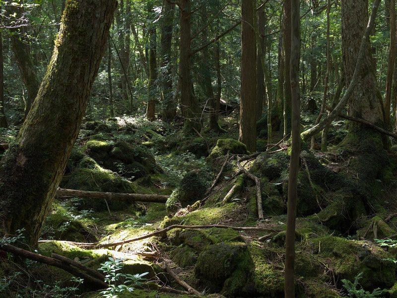 forest yamanashi