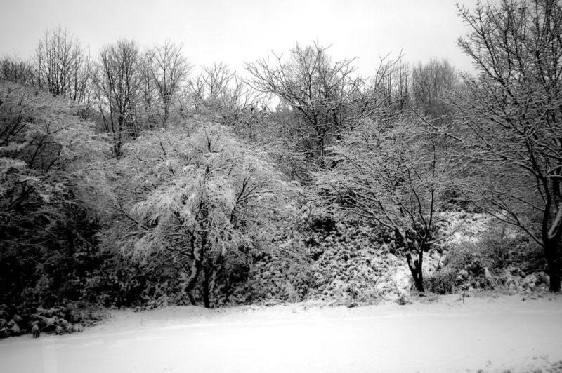 Kusatsu Snow