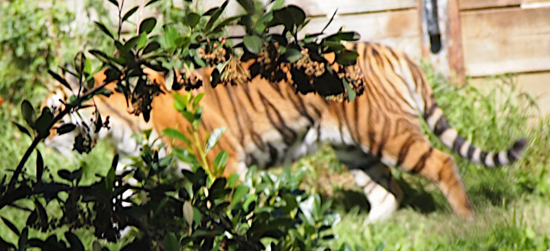 Reasons-to-visit-oakland-zoo