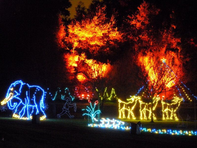 Zoo-Light-Show-in-Oakland