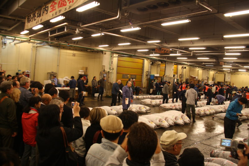 watching tsukiji auctions