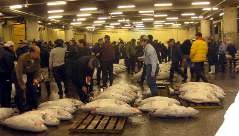tsukiji fish auction