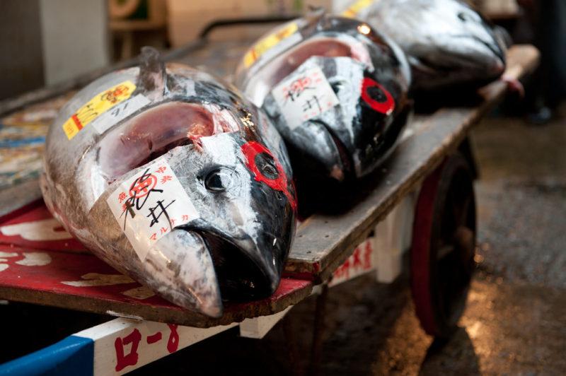 tsukiji bluefin tuna